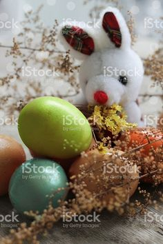 easter bunny behind the colored eggs royalty-free stock photo