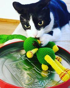 "13 aprecieri, 0 comentarii - DLT handmade (@dlthandmade) pe Instagram: ""♡ morning mood with my love #Miky & #crochetbunny ♡.........♡ #DLThandmade #passionforknitting…"" Morning Mood, Crochet Bunny, Passion, My Love, Cats, Handmade, Animals, Instagram, My Boo"