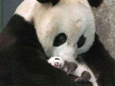 Mama #panda love