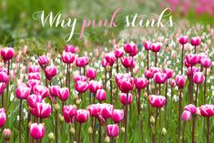 Why pink stinks if you're designing a website for women   Talented Ladies Club