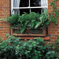Love the lush look of the ferns.