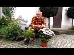 Jak posadzić hortensje? - YouTube Prepping, Grill, Youtube, Gardening, Style, Garten, Lawn And Garden, Prep Life, Youtube Movies