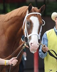 """D. Wayne Lukas: """"Now, I'm more appreciative of the Will Take Charges, the Oxbows, the Strong Mandates that come along."""""""