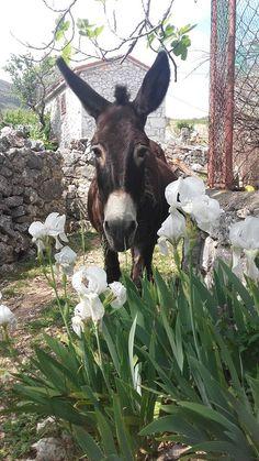 Matilda ~ Stela Galović ~ For the Love of Donkeys