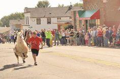 Running of the llamas in Wisconsin is no bull