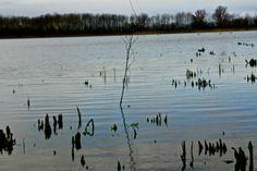Lonely water - Shot on a Canon EOS 1000D, Av, ISO 400, shutter speed 1/1000, f/10