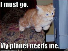 Cattain Planet!