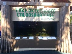 The Caloosahatchee Experience is an in progress exhibit area that features an interactive walk through the Caloosahatchee River from Lake Okeechobee to the Gulf of Mexico.  The current exhibit features an aquarium with Lake Okeechobee inhabitants, a lock and dam interactive exhibit, a FPL solar array, and a boat building water table!