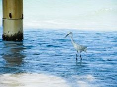 """Photo entitled """"Eco"""" taken by Jennifer on a beach in Florida"""