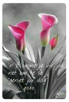 I love this colour Lekker Dag, Afrikaanse Quotes, Goeie More, Merry Christmas Wishes, Calla Lillies, Lilies, Shade Flowers, Morning Greetings Quotes, Nature Plants