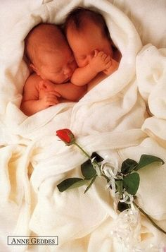 Babies by Anne Geddes - sweety-babies Photo
