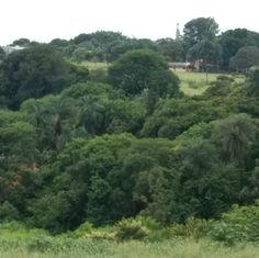 Vista da minha cozinha, aqui em Uberlândia, Minas Gerais - Brasil