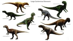 Most dinosaurs lived to be 100+ years old. Try this dinosaur related spelling list.   http://www.spellingcity.com/view-spelling-list.html?listId=2991133
