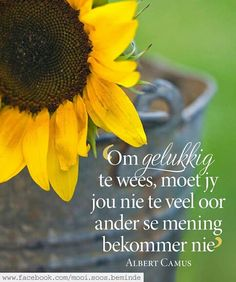 Afrikaans Quotes, Albert Camus, Hart, Favorite Quotes, Teaching, Gift Ideas, Inspiration, Biblical Inspiration, Education