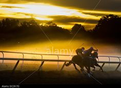 Horses exercise in the morning mist and fog on the Oklahoma Training Track at Saratoga Race Course. Saratoga Springs, New York. August 6th, 2013.  © ZUMA Press, Inc. / Alamy