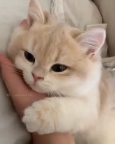 Funny Cute Cats, Cute Baby Cats, Cute Cats And Kittens, Cute Little Animals, Cute Funny Animals, Kittens Cutest, Cute Dogs, Cute Kitty, Cats In Love