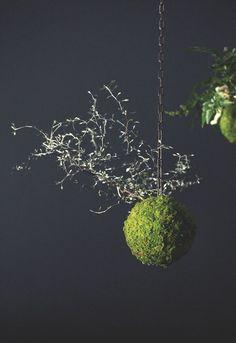 Adrien Bénard : art végétal du kokedama - Côté Maison