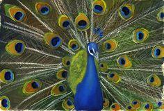 Peacock Splendor by Lori Presthus