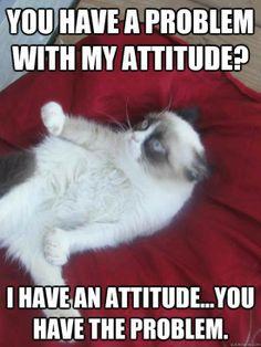 Grumpy quotes, grumpy cat quotes, sarcastic quotes for more humor Grumpy Cat Quotes, Funny Grumpy Cat Memes, Cat Jokes, Animal Jokes, Funny Animal Memes, Funny Animal Pictures, Cute Funny Animals, Cute Cats, Funny Cats