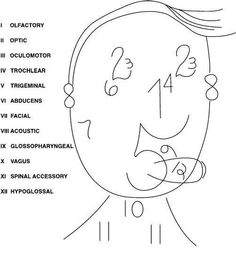 A easier way to remember the 12 cranial nerves