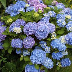 Neste artigo irás entender o que são as plantas invasoras, quais as caraterísticas comuns e quais os problemas/impactes negativos inerentes as estas. Poderás também observar exemplos (alguns basta…