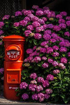 Hydrangea and post at Kamakura, Japan 鎌倉 力餅屋 Kamakura, Beautiful Flowers, Beautiful Places, Beautiful Life, Hortensia Hydrangea, Hydrangeas, Photos Voyages, Japanese Beauty, Japanese Style