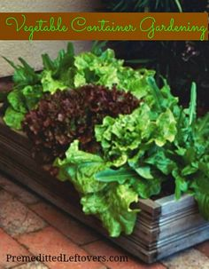 Vegetable Container Gardening - Premeditated Leftovers