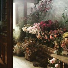 Clematis Trellis, Beautiful Flowers, Instagram, Plants, Painting, Shop, Art, Art Background, Painting Art