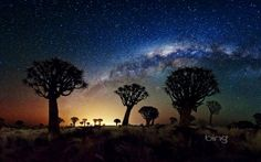 Milky Way over Namibia's Quiver Tree Forest