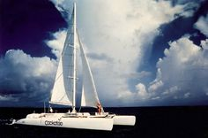 Racing catamaran Cockatoo - Diving center Parrots Landing
