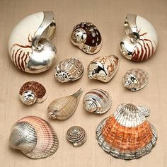 Silver coated seashells