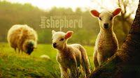 bibeltagebuch: Kennst du diesen Hirten schon? Text & Audio