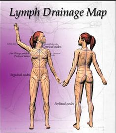 Lymph Drainage: Lymphatic drainage massage is a profound technique to help increase lymph flow. With an increase of lymph flow immune function is increased. Use a variety of repetitive circular, straight and vibration strokes following the anatomy of the lymphatic system.
