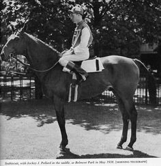 Seabiscuit - had deep bond with his jockey Red Pollard, and their teamwork produced great achievements