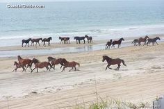 The Outer Banks, NC - beaches where wild horses roam..... My dream Vacation