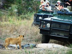 7 questions to ask when planning a safari in South Africa