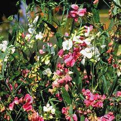 1000 Images About Heat Tolerant Plants On Pinterest
