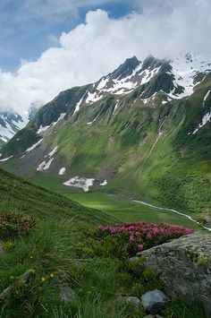 Rhododendron - The path that climbs to the Hospice of Grand St Bernard, Valais, Switzerland