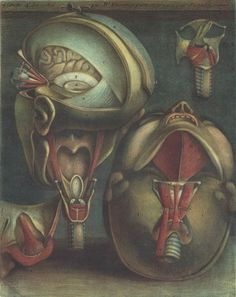 Two Views of the Head, 1746  Jacques-Fabien Gautier-Dagoty (French, 1716–1785)