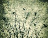 Birds in tree...writing.....great look.