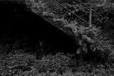 Tra muri, foglie, rovi e babbaceglie