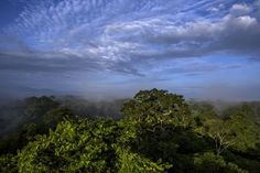 Restored Forests Breathe Life Into Efforts Against Climate Change. In the battle to limit the risks of climate change, it has been clear for decades that focusing on the world's immense tropical forests — saving the ones that are left, and perhaps letting new ones grow — is the single most promising near-term strategy.