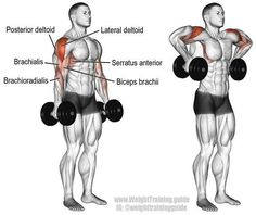 A compound pull exercise. Muscles worked: Lateral deltoid Posterior Deltoid Supraspinatus Brachialis Brachioradialis Biceps Brachii Middle and Lower Trapezii Serratus Anterior Infraspinatus and Teres Minor. Fitness Workouts, Gym Workout Tips, Dumbbell Workout, Fitness Motivation, Deltoid Workout, Dumbbell Exercises, Serratus Anterior Workout, Training Exercises, Exercises For Deltoids