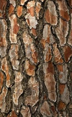 58 Trendy Ideas For Nature Wood Pattern Tree Trunks Tree Patterns, Wood Patterns, Patterns In Nature, Woods Photography, Texture Photography, Close Up Photography, Wood Texture, Texture Art, Natural Forms