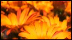 TV3 - Colors en sèrie - Taronja: moviment continu