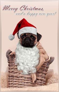 Simply Having A Wonderful Christmastime: Photo Animals And Pets, Baby Animals, Cute Animals, Pug Christmas, Xmas, Christmas Trees, Christmas Gifts, Pugs And Kisses, Basic Dog Training