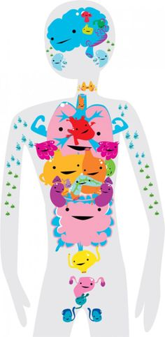 Meet your organs - fun way to learn about organs
