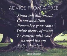 Tuesday to do list..1. Hug a tree 2. Stop & smell the flowers 3. Get barefoot on the grass. Enjoy your day