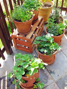 How to grow your own food if you're a renter