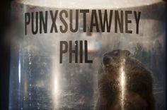 Groundhog Punxsutawney Phil predicts early spring — Nation ...